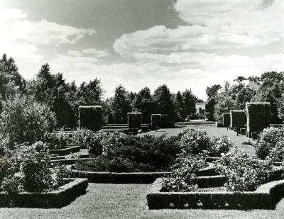 The Hedge Garden & collection of old fashioned roses