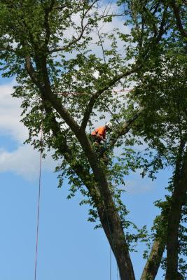Beau Nagan cutting a limb from a tree