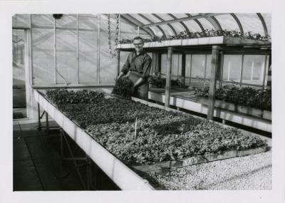 Joe Bores holding planter box in greenhouse