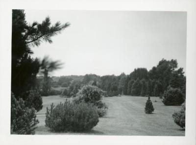 Arboretum Evergreen Collection