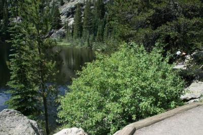 Acer glabrum (Rocky Mountain Maple), habitat