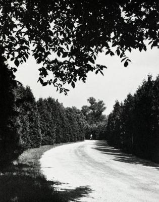 Arbor vitaes along Lake Road with overhead tree branches in foreground, south side Lake Marmo