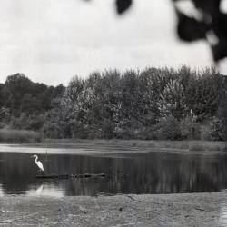 Puffer Lake with heron looking left