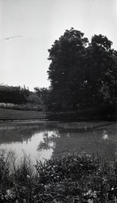 Joy Path viewed across water with tall trees at right