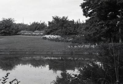 Water in foreground, peonies along Joy Path south of Morton residence