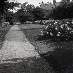 Peonies along Joy Path with Morton residence in distance