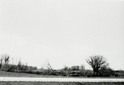 Bare trees, some fallen, near road