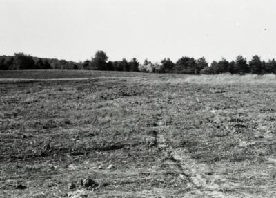 Empty field with line of trees in the distance