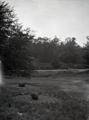 Evergreens near road at Arnold Arboretum
