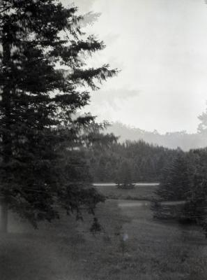 Evergreens near water at Arnold Arboretum