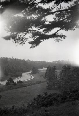 Winding road through evergreens at Arnold Arboretum
