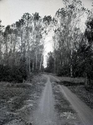 Arboretum road heading straight toward poplar tree test area, south of Spruce Hill