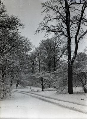 Forest Road in winter, probably near Buckeye Collection
