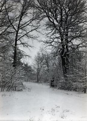 Forest Road in winter, possibly leading to woodlot