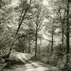 Gravel road curving through trees