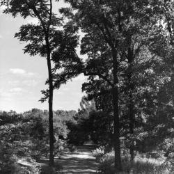 Joy Path looking south