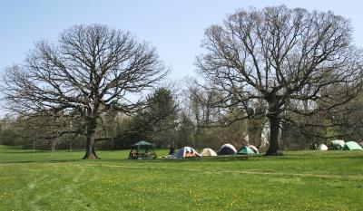 Quercus macrocarpa (Bur Oak), Quercus alba (White Oak), habitat