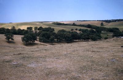 Quercus macrocarpa (bur oak), trees in hollow