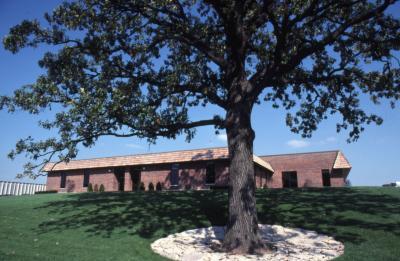 Quercus macrocarpa (bur oak), habit, early fall