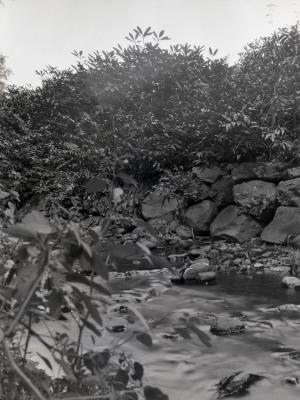 Rocky water edge at Arnold Arboretum