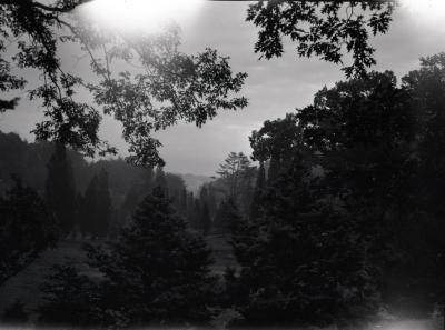 Water viewed through evergreens at Arnold Arboretum