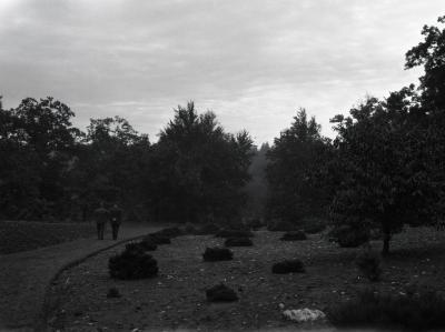 Joy Morton and O. C. Simonds walking through evergreens at Arnold Arboretum