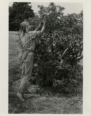 Sandy DeFrank pruning a shrub