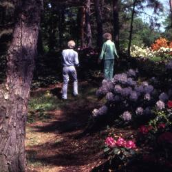 Arbor Day, two people walking in woods near blooming flowers