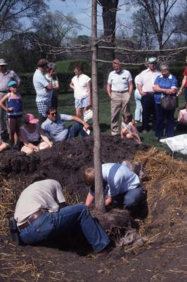 Arborfest, tree planting with visitors watching