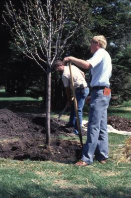 Tom Green standing with shovel and helper planting tree at Arborfest
