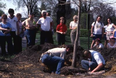 Crowd watching Tom Green and helper place tree in dug hole for Arborfest tree planting