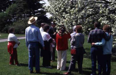 Close-up of crowd looking at crabapple in bloom at Arborfest