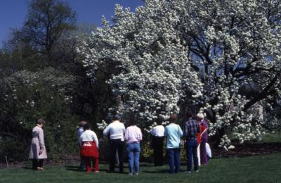 Visitors in front of crabapple and lilac in bloom at Arborfest