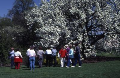 Crowd in front of crabapple in bloom at Arborfest