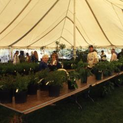 Customers shopping in Arbor Week Surplus Plant Sale tent