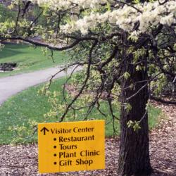Arbor Week directional sign to Visitor Center under tree in bloom