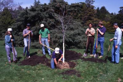 Doug Monroe removing burlap from tree for Arbor Day tree planting while employees hold shovels and watch