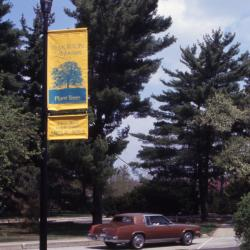 Yellow Morton Arboretum and Arbor Week banners on light pole alongside road with car passing