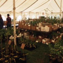 Members' Cooperative Research Program, plants in boxes in tent