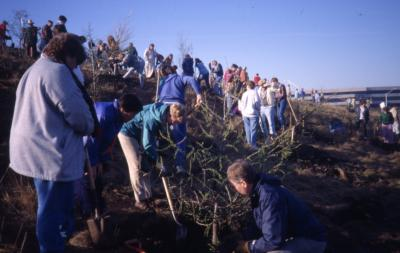 Crowd planting trees on the berm on Earth Day