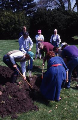 Employees digging hole for tree planting on Arbor Day