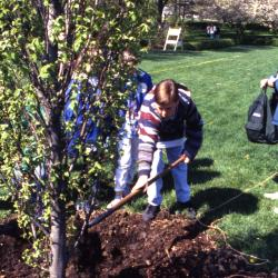 Boy shoveling soil over newly planted tree during Arbor Day tree planting near Hedge Garden