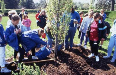 Children pouring water on newly planted tree on Arbor Day