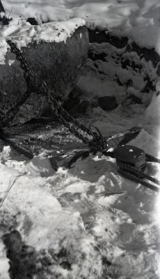 Balled roots of tree on sled with pulley and chain in winter for tree transplanting