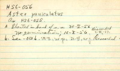 Aster paniculatus