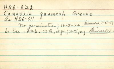 Camassia quamash Greene