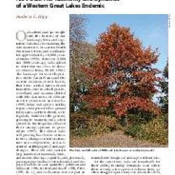 Quercus (oak), acorn habitat