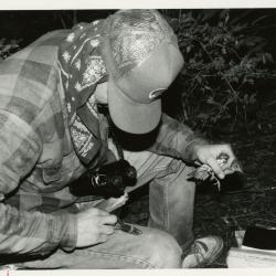 Research intern banding a bird for Chris Whelan bird population study