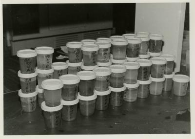 Vials with root samples after washing