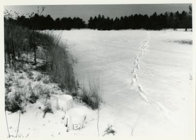 Salt study, plastic buckets near plants in snow field with trees in the distance